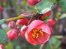 아산 가볼만한곳 아산 신정호에 자생하는 봄맞이 꽃나무 알아보기