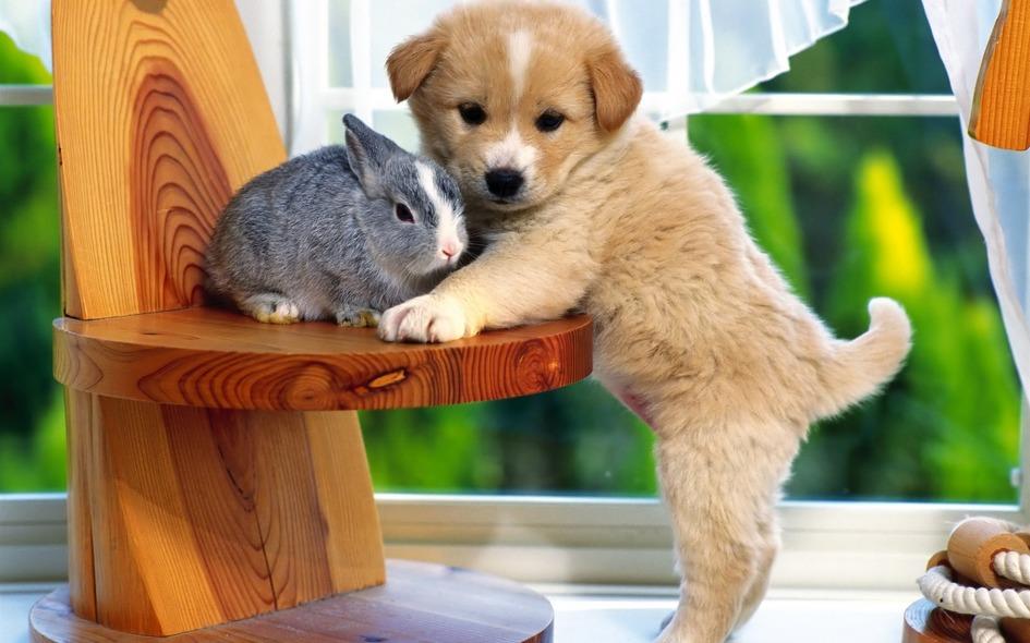 토끼와 멍멍이