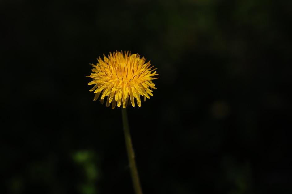 동네의 식물 나들이