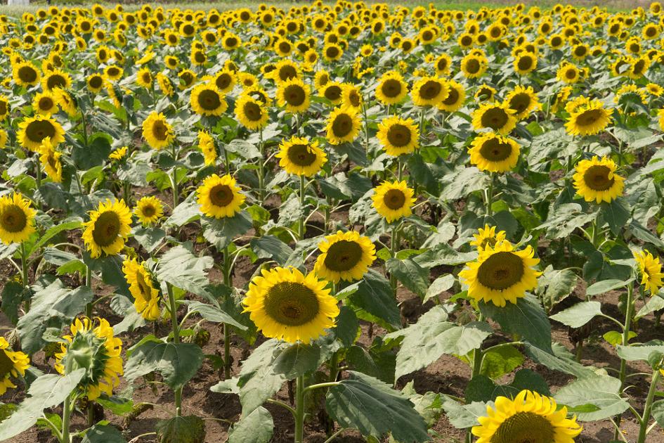 제주 아이들과 함께 가기 좋은 메밀꽃밭 렛츠런 파크!