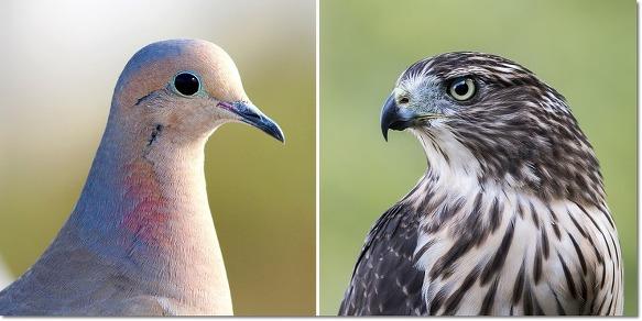 매파 (Hawks) vs. 비둘기파 (Doves)